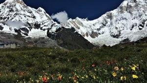 monsoon trek in Nepal is full of flower, picture from annapurna base camp in rainy season