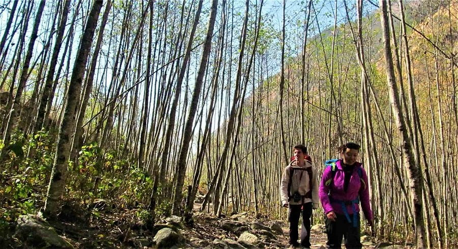 walking through the jungle in langtang valley trek