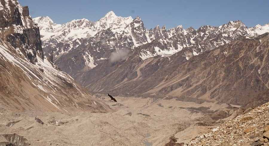 Falcon flying above the glacier of kanchenjunga