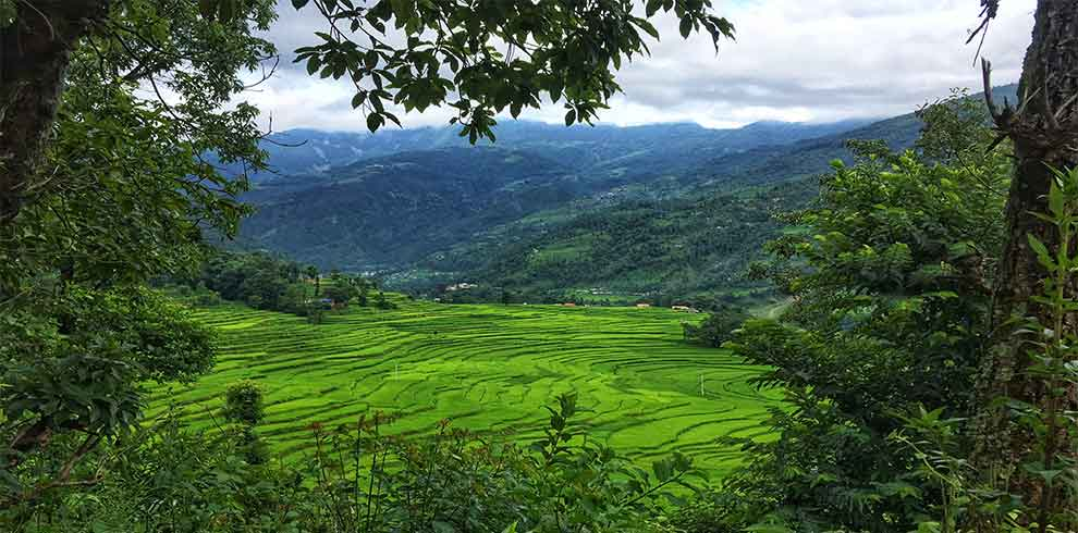 Looking through the trees shows beautiful landscape and terrain of paddy field in our cycling tour
