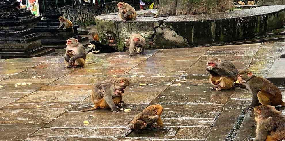 monkeys seen at swyambhunath temple, seen on 1 day Kathmandu Tour