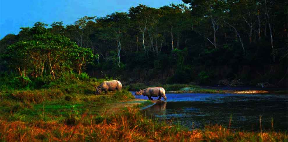 sighting of one horned rhino in one nepal luxury tour package