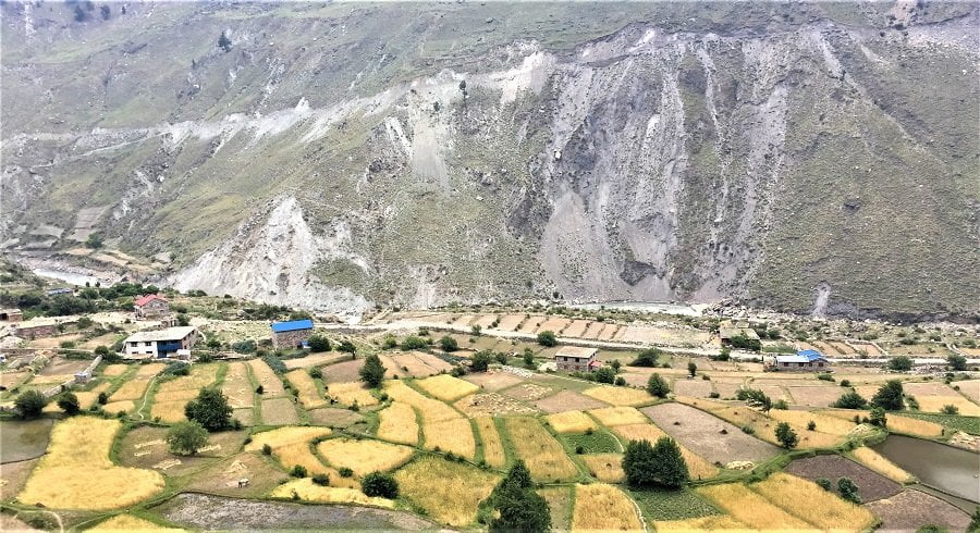Wheat and barley field of village in lower dolpo region
