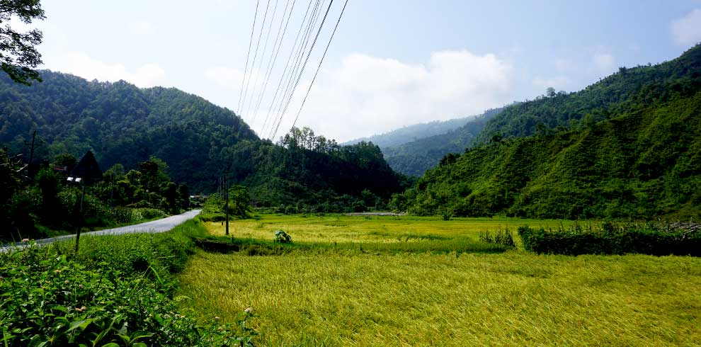 Paddy field captured on our Rampur village charity tour in nepal