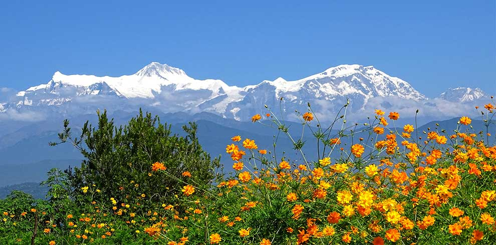 Mountains and the beauty of flower seen from one of the local house in Rampur village